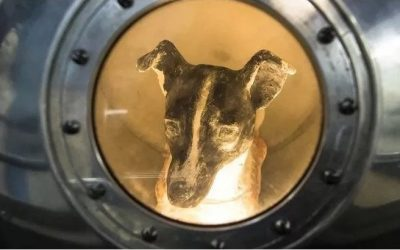A short history of sending animals in space