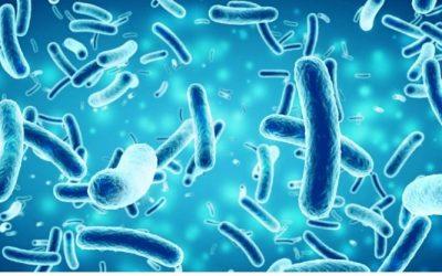 How do tiny organisms like bacteria communicate?